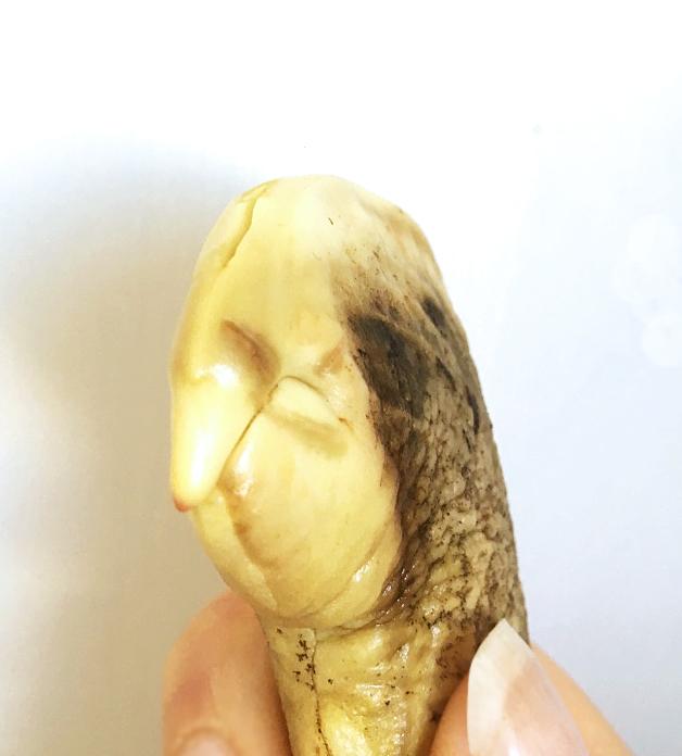 mangokärna